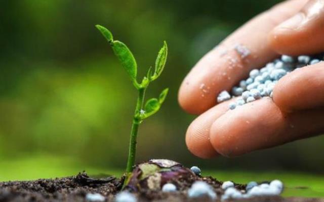 硝酸磷肥如何正确施用以及硝酸磷肥施用建议
