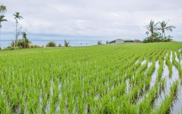 农作物施肥有哪些常见注意事项